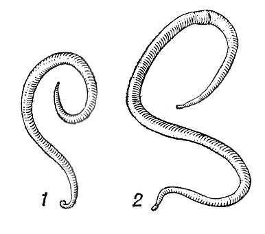 1 - самец 2 - самка