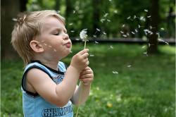Противопоказание к применению шалфея детям до 5 лет