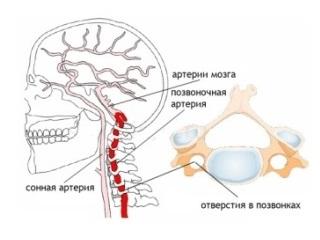 Где развивается гипоплазия