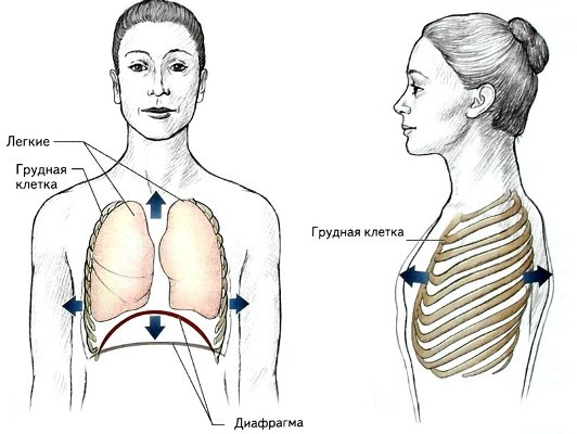 Движения грудной клетки при дыхании