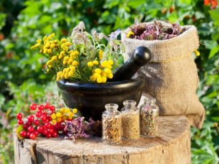Растительные рецепты лечения грыжи