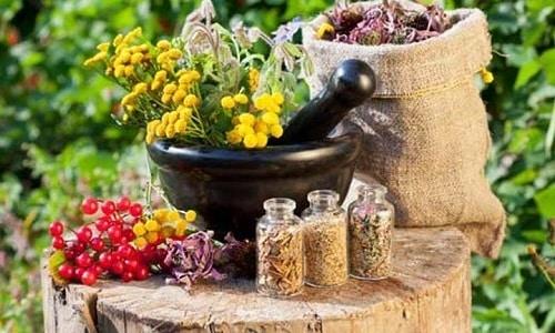 К сожалению, целебные травы и растения не в силах справиться с распространенным онкологическим процессом