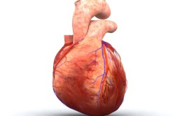 Опасность патологии сердца при запущении лакунарной ангины