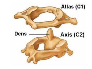 Атлант и аксис (эпистрофей)